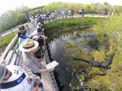 Visitors and staff enjoy touring Everglades National Park.