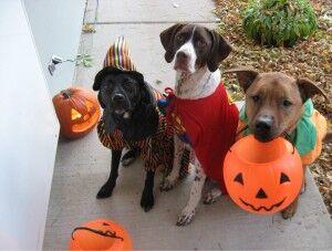 Pets at Halloween
