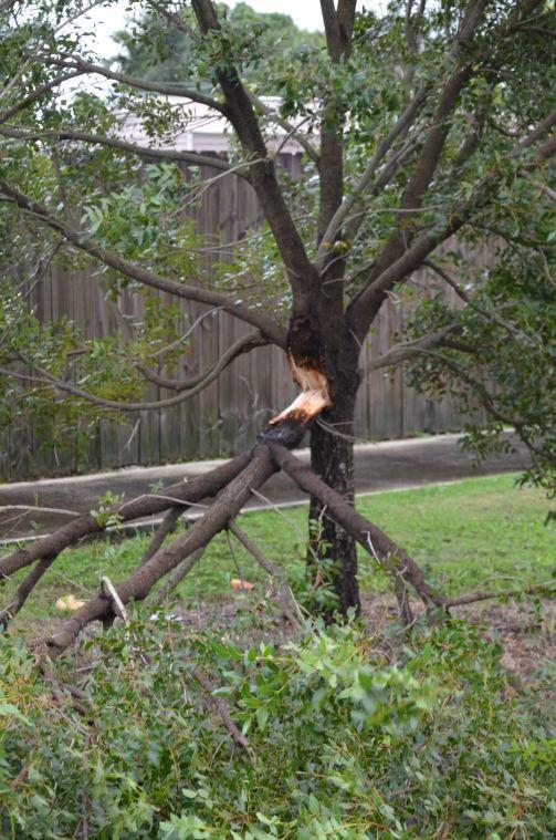 TS Isaac Broken Tree