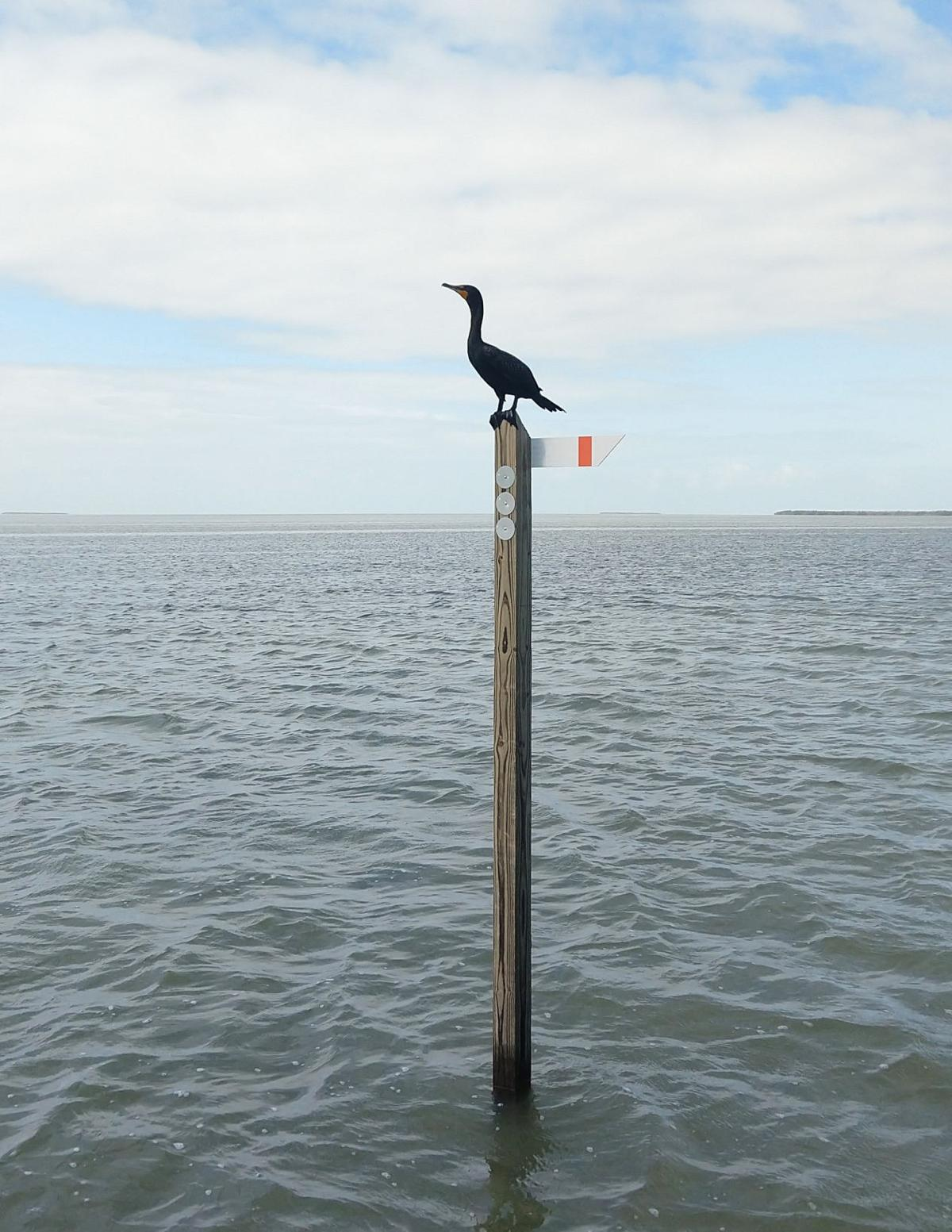 Channel markers such as these help guide boaters through Florida Bay. This channel marker is serving a dual purpose as a resting spot for a cormorant. NPS photo