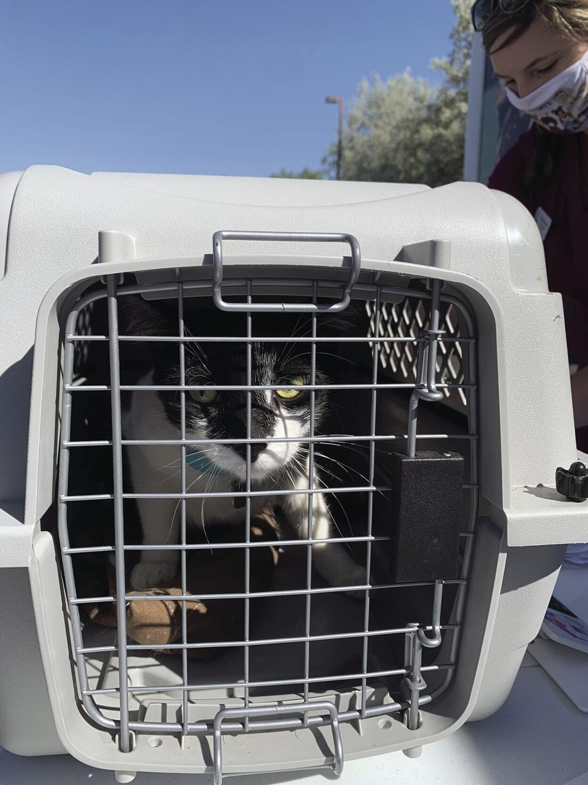 HSPPR program brings low-cost veterinary care to community critters