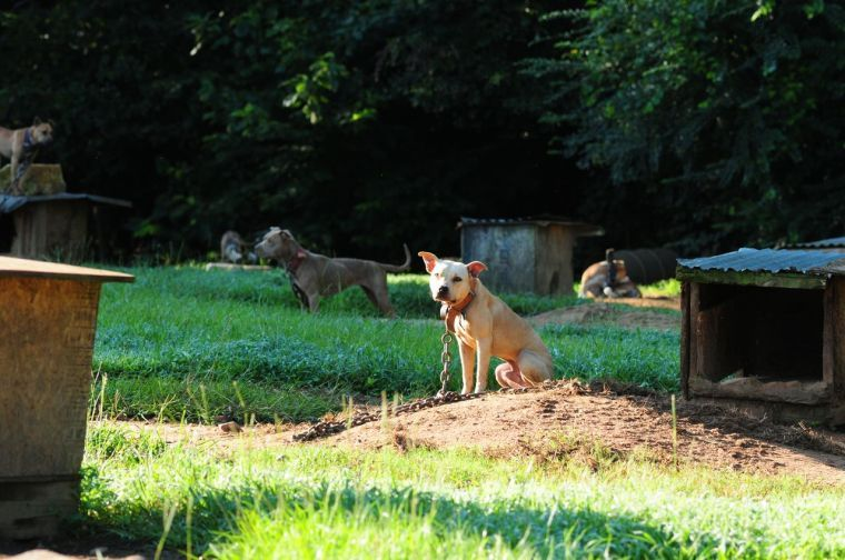 Dog fighting site in Waverly, Ala.