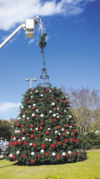 City unveils Christmas tree