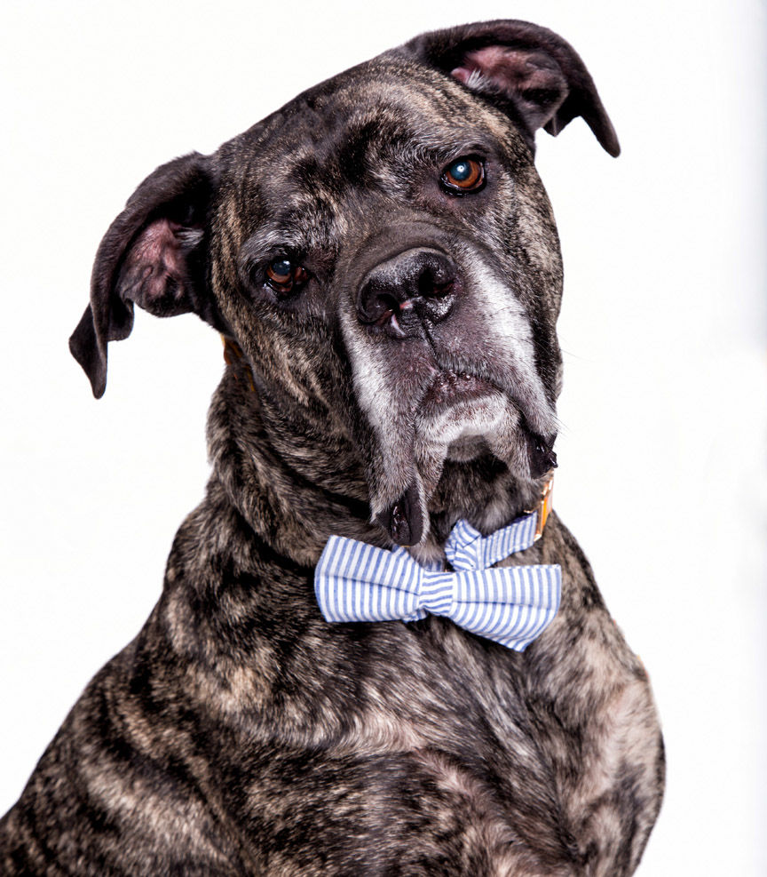 WCAC) Angus is quite the dapper dog.  He needs a forever home..jpg