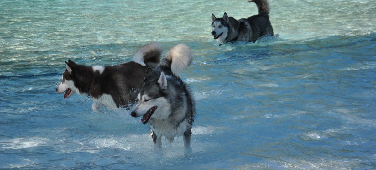 Dog swim 2