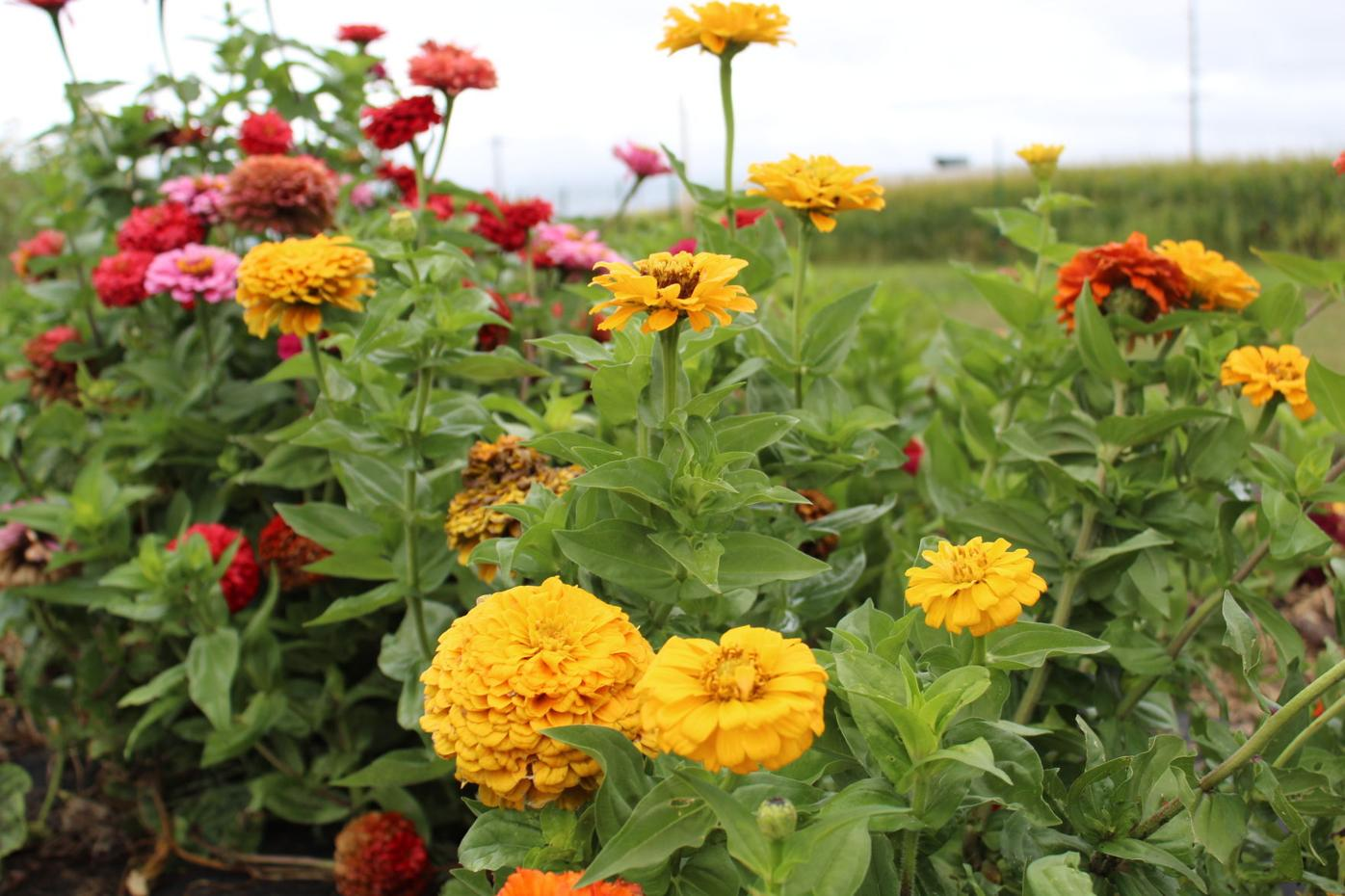 Master gardeners flowers at the Owatonna Community Garden (copy)