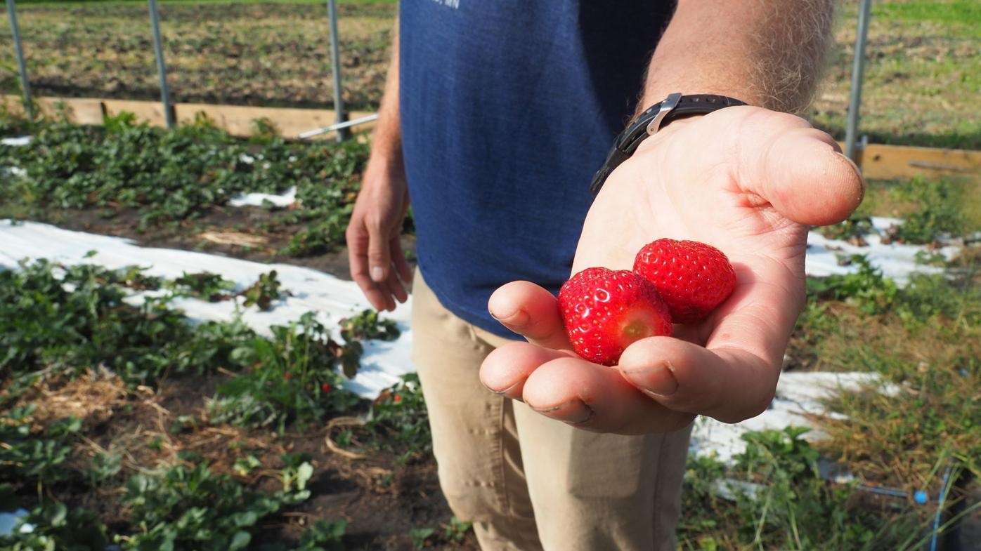 Little Hill Berry Farm