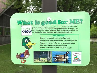 Feed The Birds Just Don T Feed Ducks Bread News Southernminn Com