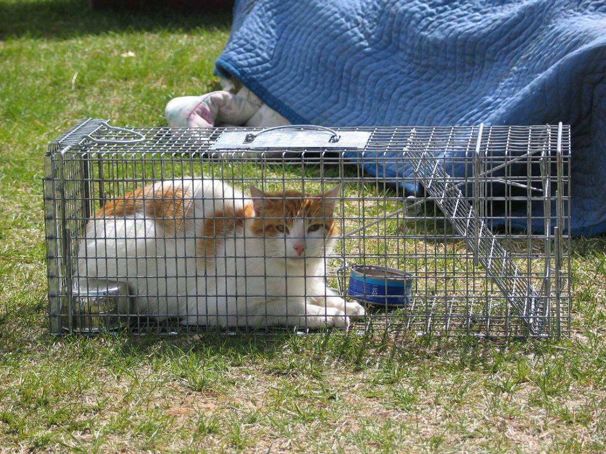 Humane Society Hopes To Utilize Mn Snap To Combat Faribault S Feral Cats News Southernminn Com