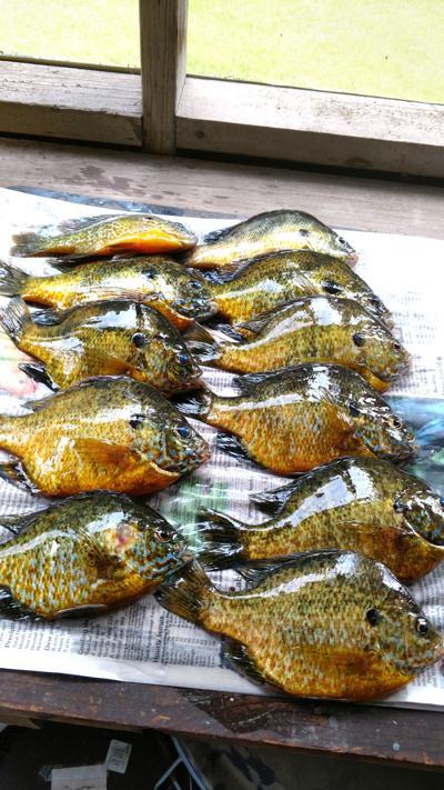 Summer heat means hot pan fish bite