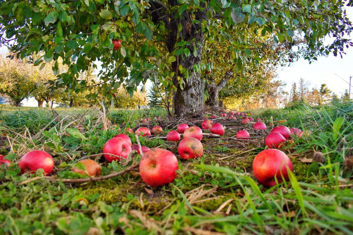 Fleur-de-lis Trumps Orchard