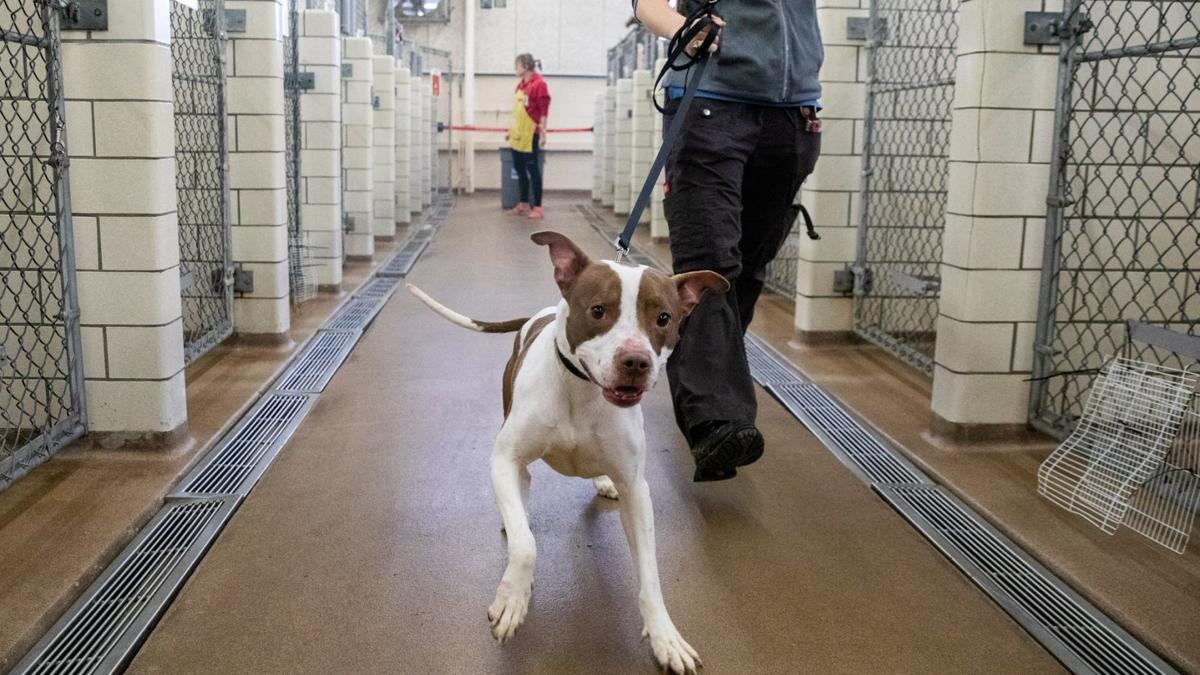 Before animal shelter temporarily halts adoptions, pets find new homes