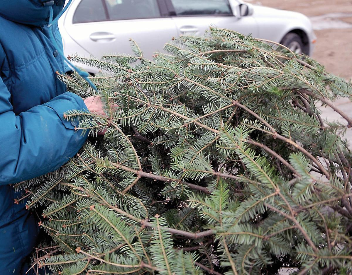 O, Christmas Tree, how do we get rid of thee? | Local ...