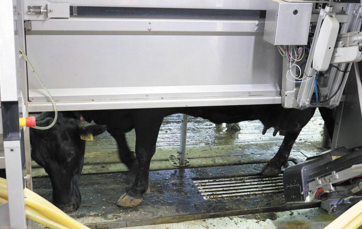 Balzer Dairy Farm