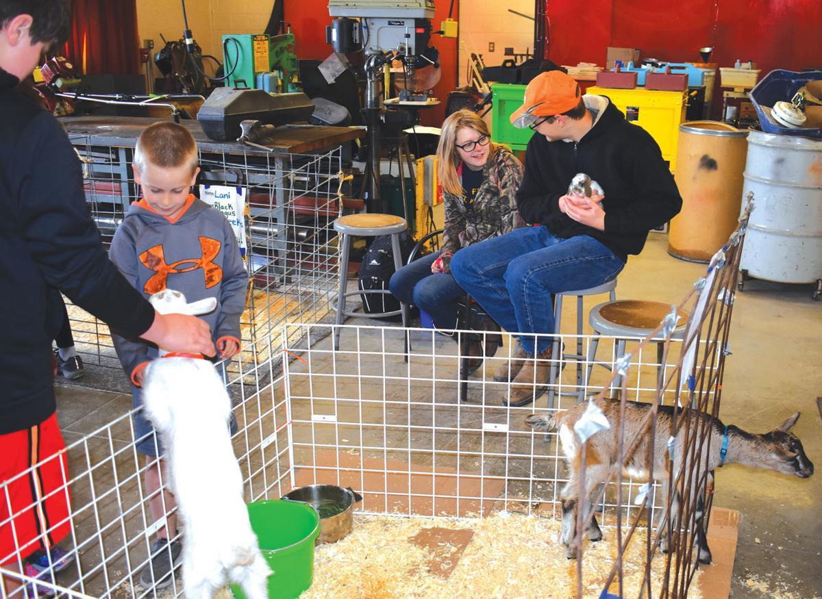 Medford Baby Animal Day 1