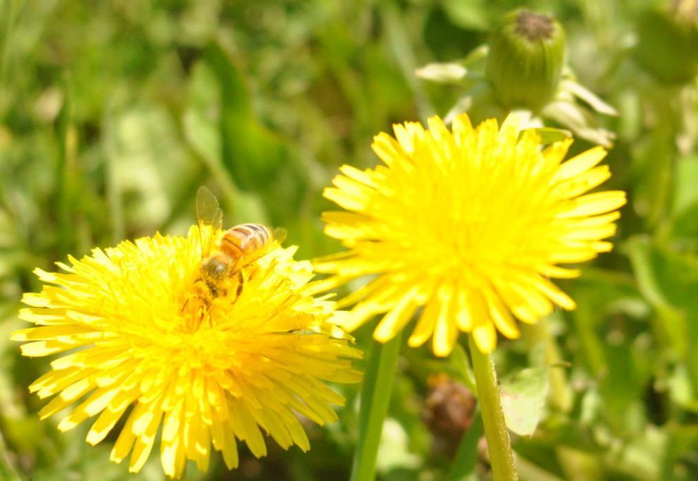 Bee Ney