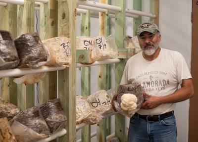 Kasota Mushrooms 1