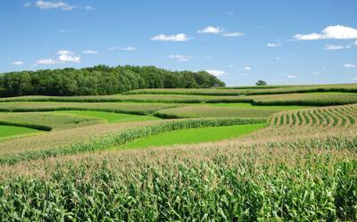 Agriculture Lands - Corn Crops