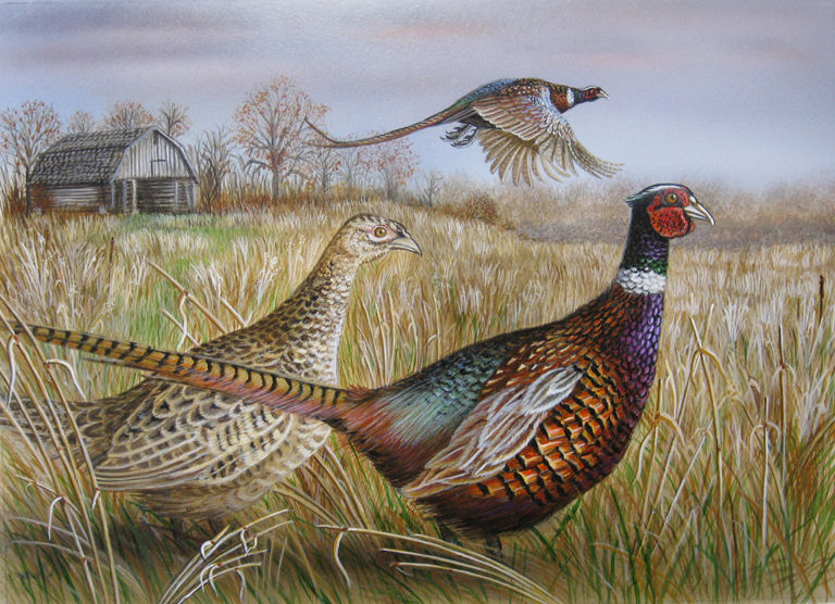2017 MN Pheasant Stamp Entry tied 1st copy.jpg