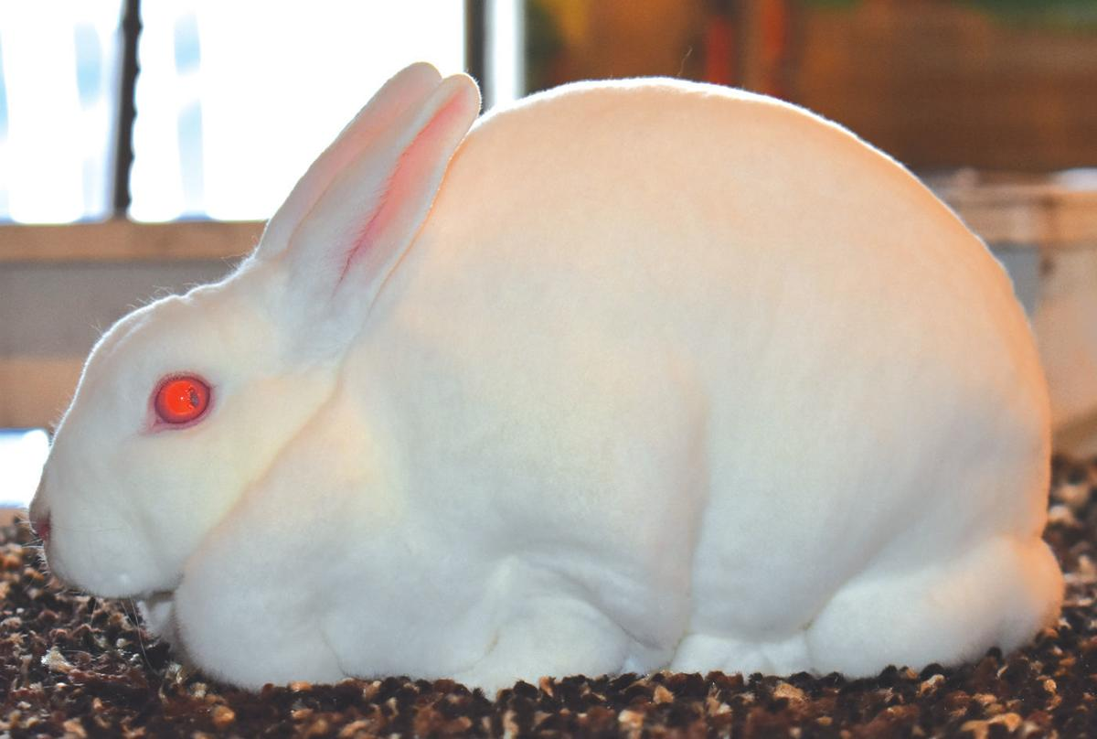 fair rabbits 2