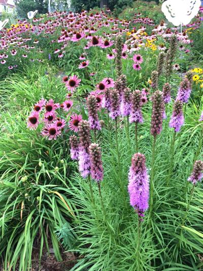 It's time to plan for rain gardens