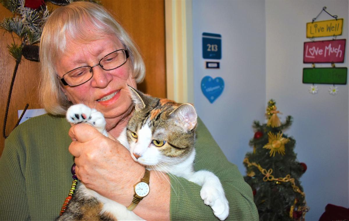 A lot of toes: Northfield cat may match Guinness World Record