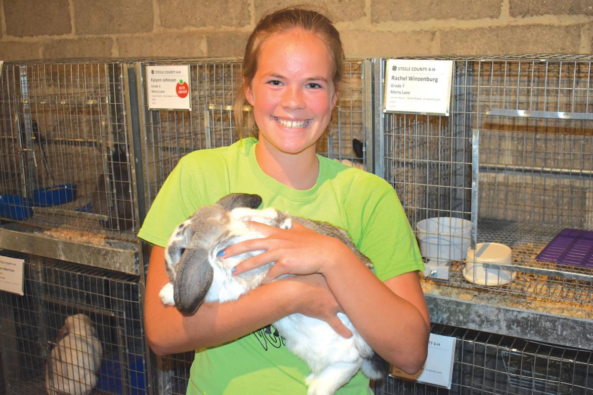 fair rabbits 1