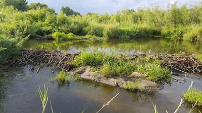 Beaver Dam during the 'Visit to Prairie Habitat'