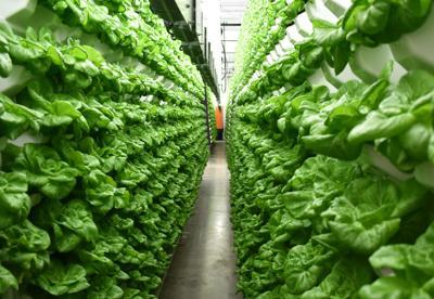 Living Greens Farm