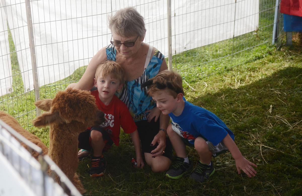 GALLERY: Plenty of fun to be had at 15th annual National Alpaca Farm Days