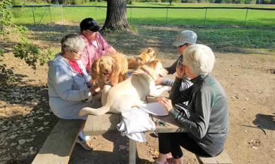 Dog Park 1