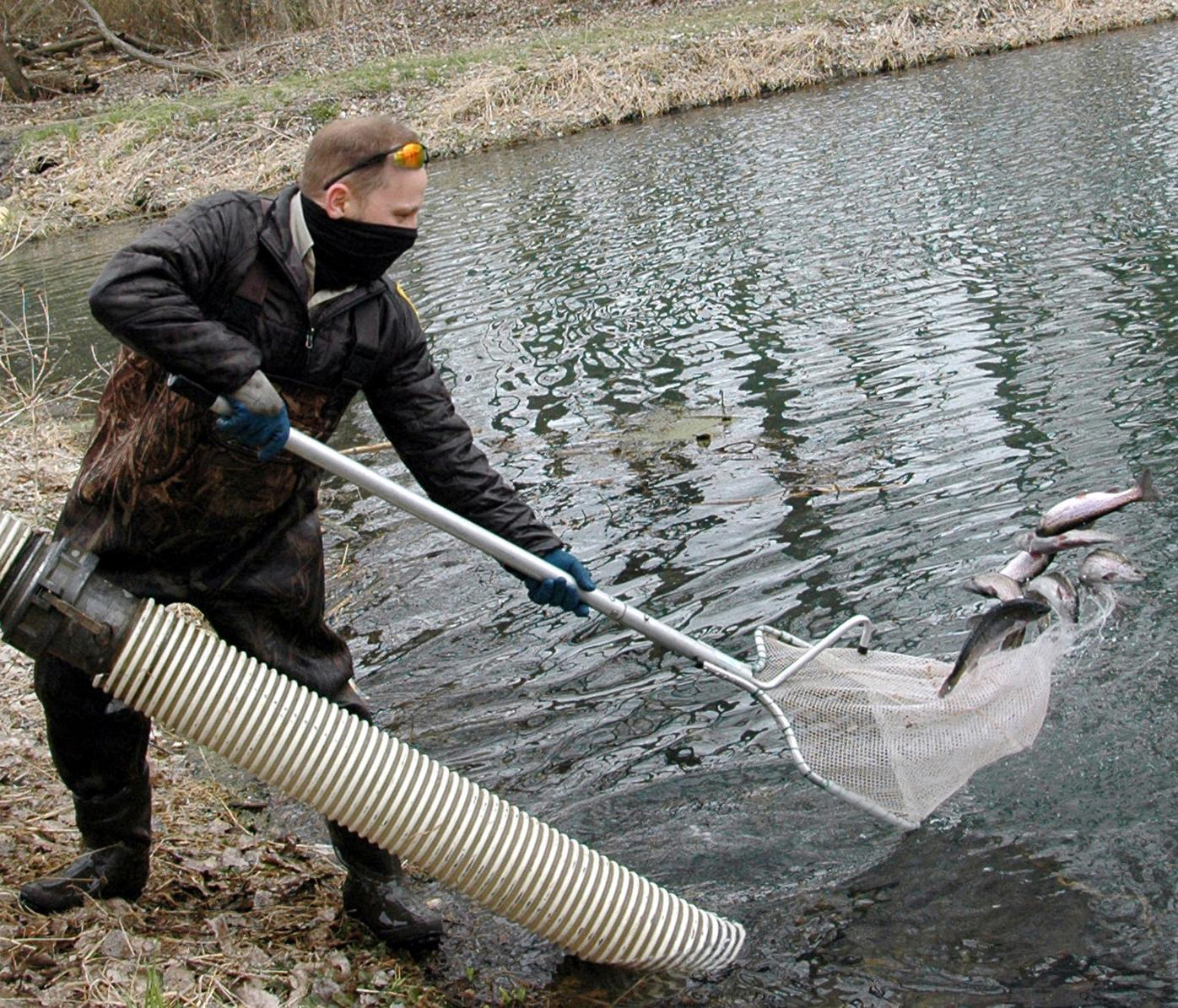 Trout Ponds pitches in a net full.jpg