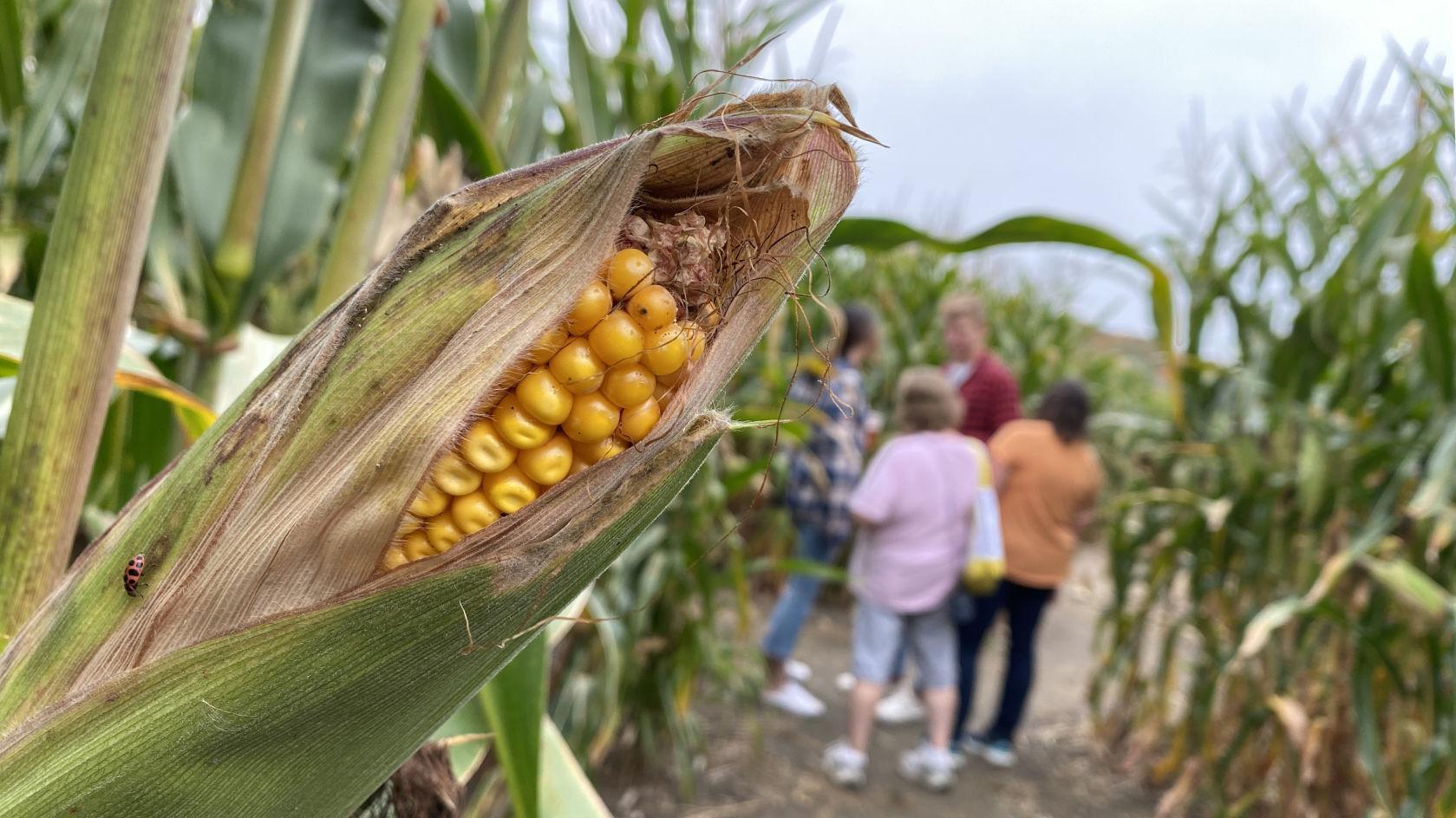 Bridgewater agritourism ordinance change highlights growing industry