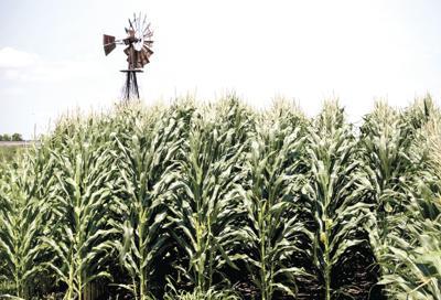 Government Shutdown Farmer Payments