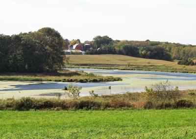 Rice County wetland