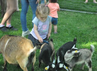 Le Center Goats