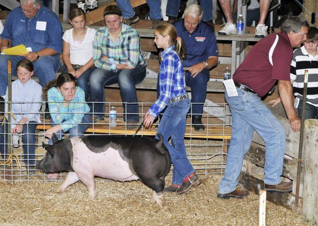 4 h livestock auction celebrates 50 years of supporting youth and 4 megan mattson herds her hog into the sale pen during the 2013 goodhue county 4 h livestock auction terri washburnthe kenyon leader altavistaventures Images