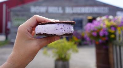 Bow-Hill-Blueberries-Ice-Cream-Sandwich-e1625094302664-1024×563