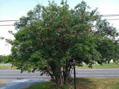 3021-07-16 Tree Flagging pic2.jpg