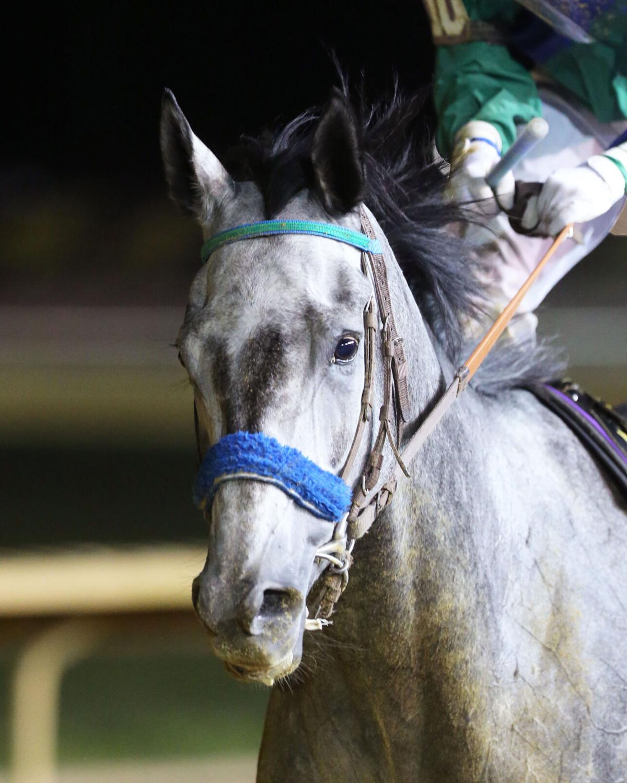 STAR OF NIGHT - West Virginia  Cavada Breeders' Classic - 10-09-21 -  R07 - CT - Come Back 01.jpg