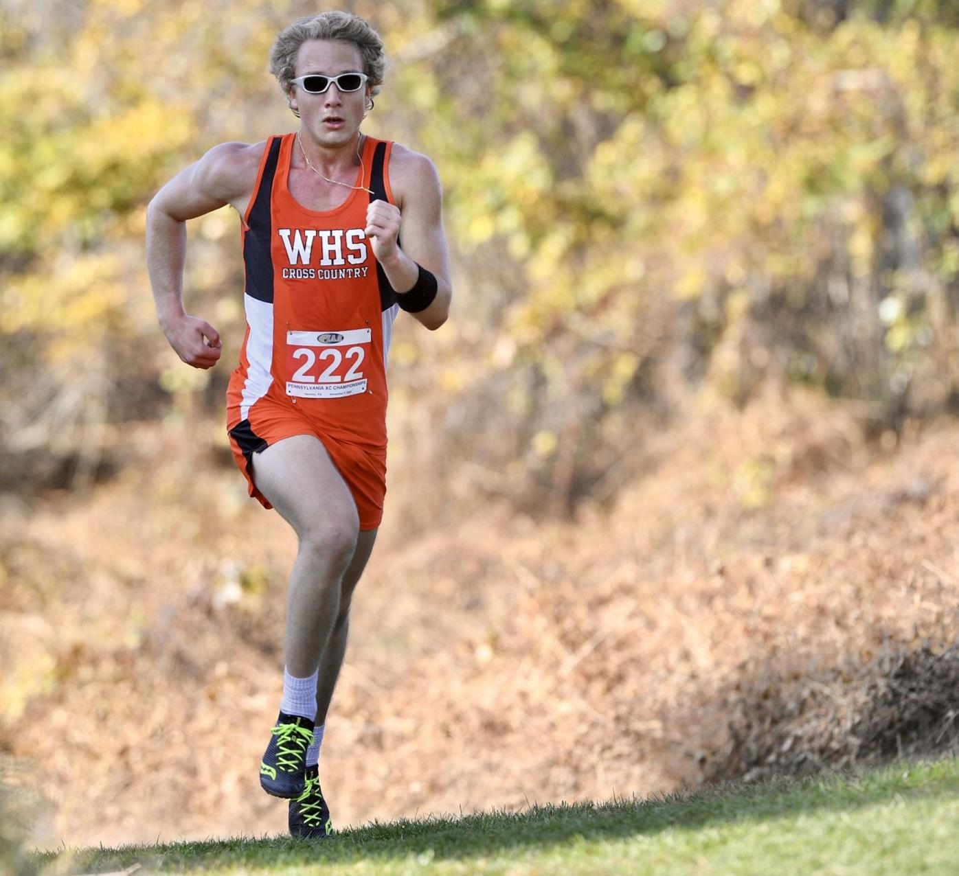 PIAA CROSS COUNTRY: Area's top runners compete at state meet