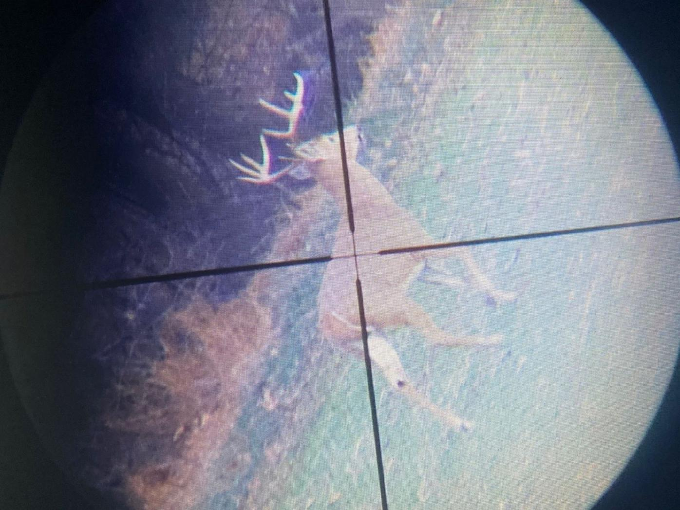 Crosshairs rest on a 10-point buck