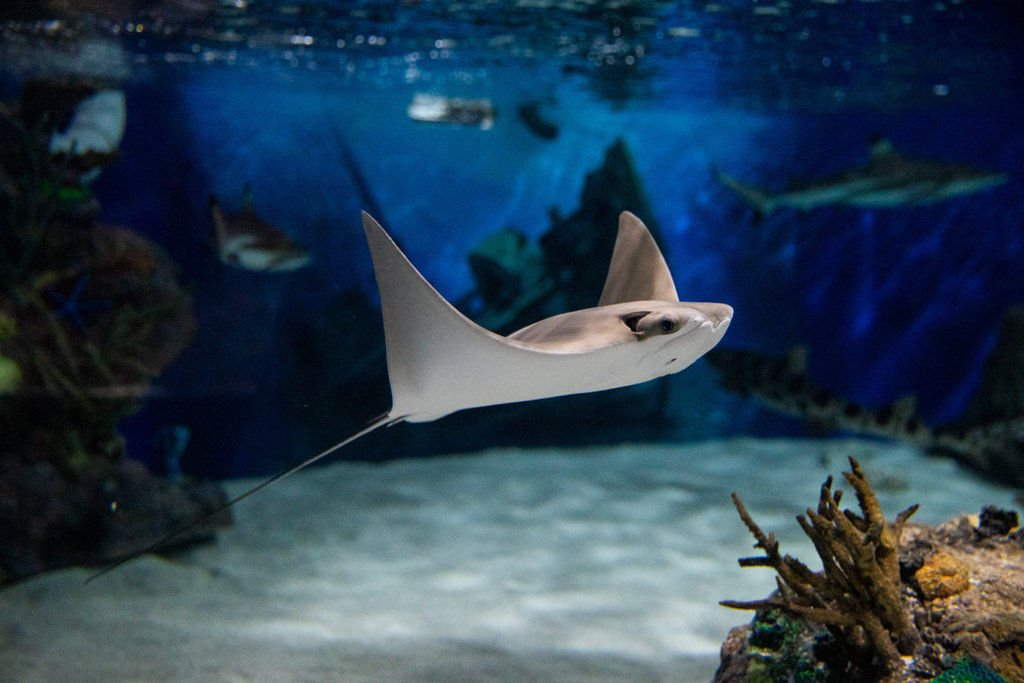 Scranton aquarium plans for big comeback