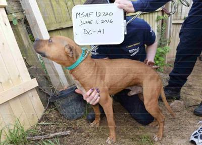 Washington D.C. man sentenced in dog fighting case