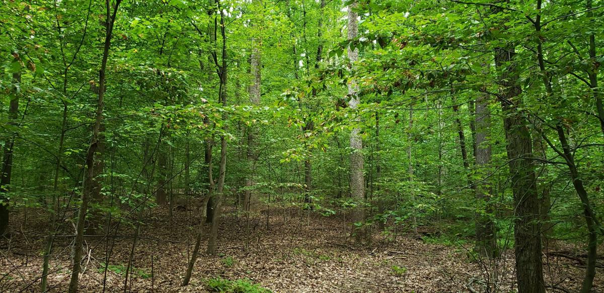 Conserved forest in Catoctin Mountains PEC 2020