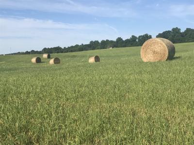 Hay (copy)