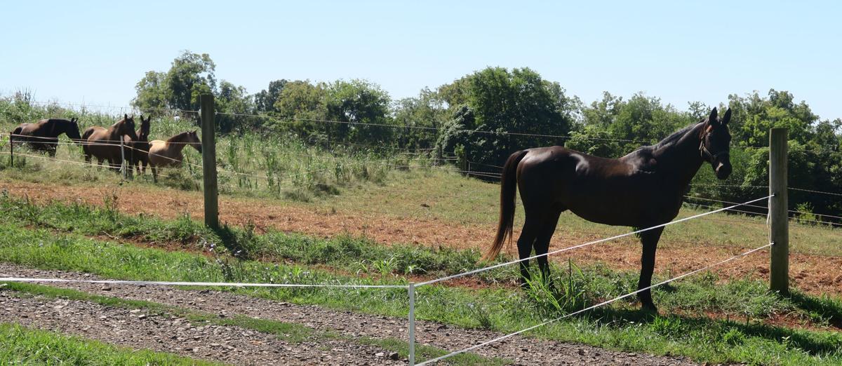 HorsesSECONDARY