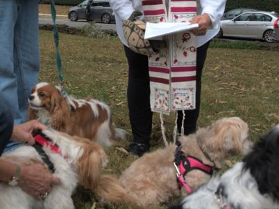 Rabbi Rose Jacob Blessing the Animals