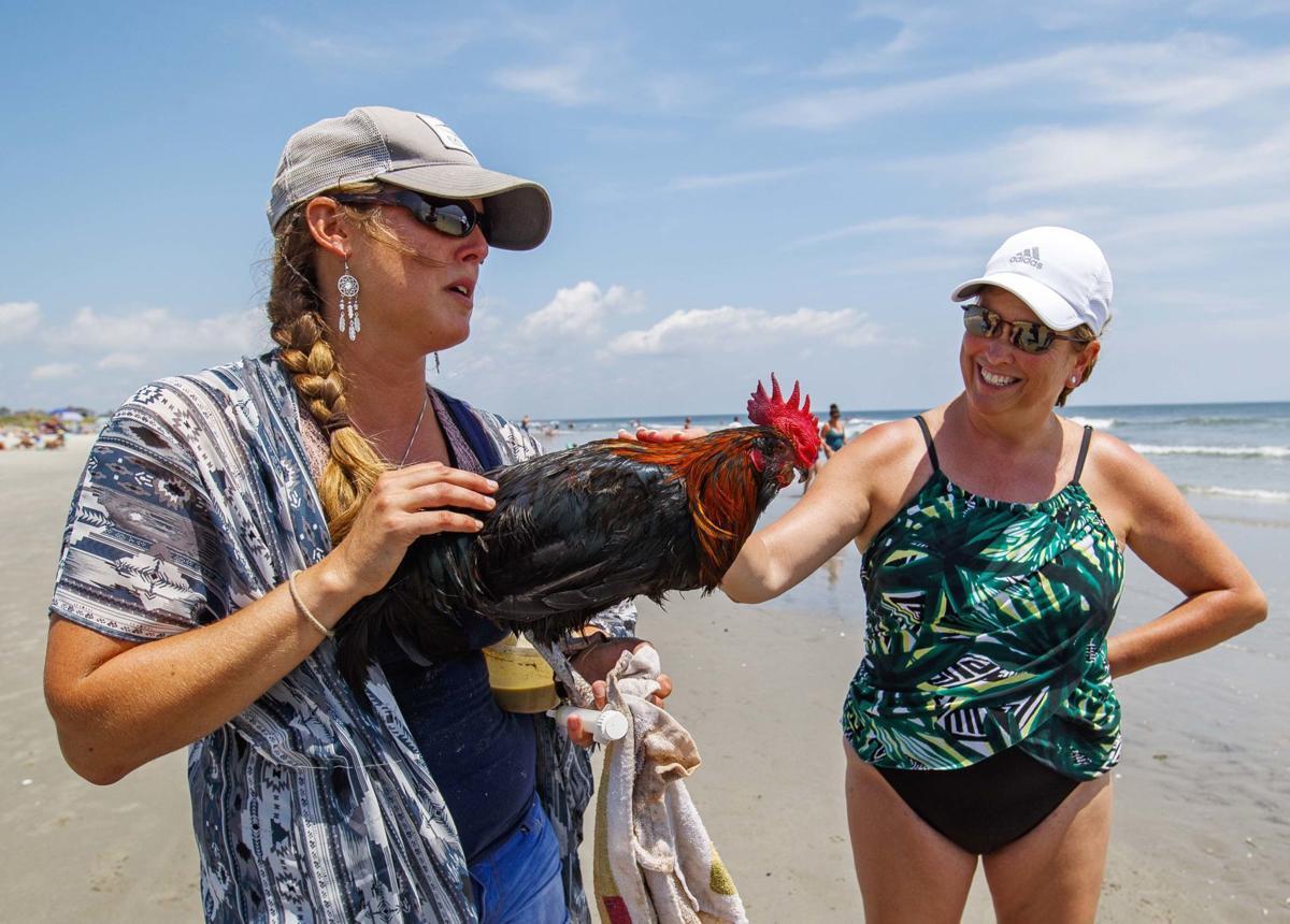 Bluff, an adventurous rooster