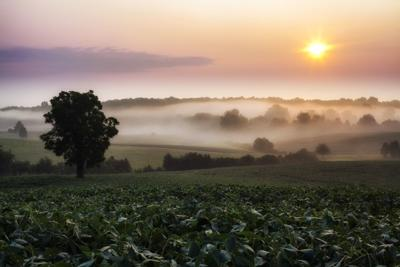 Chancellorsville battlefield at dawn